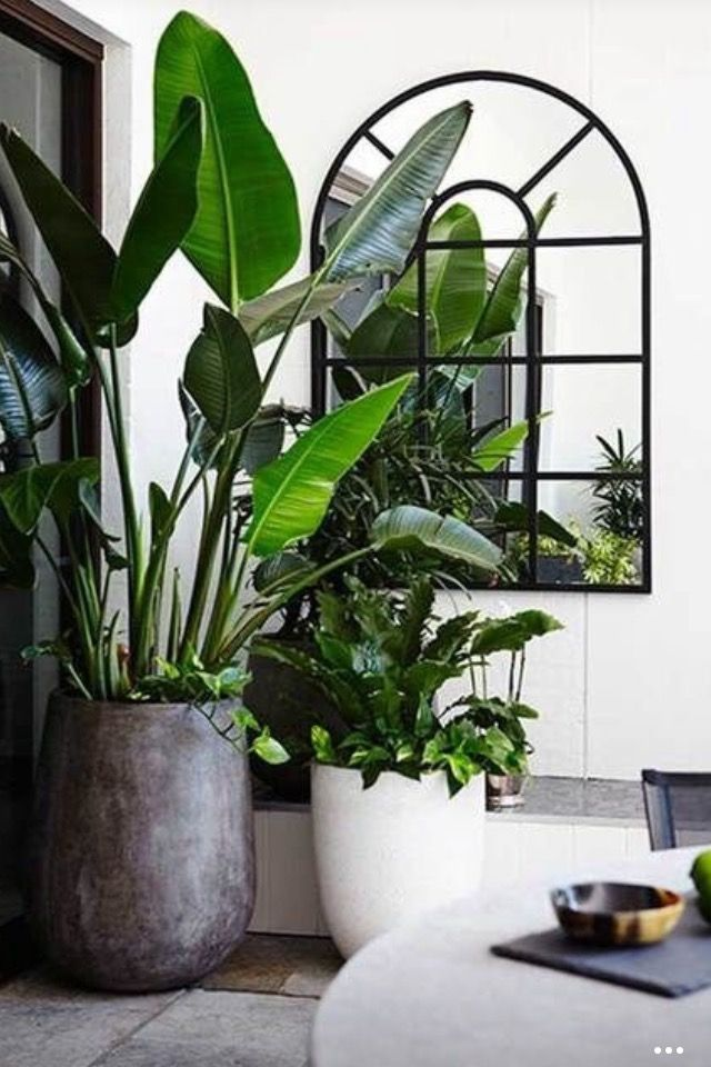 10 excellent ideas for displaying houseplants in the interior #anzuzeig ...