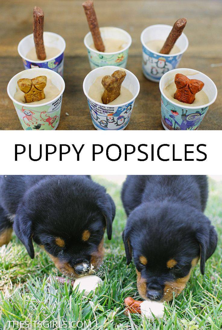 Puppy ice cream in steel - The Sway DIY & Recipes - #DIY #Recipes #Steel #Sway #Well ...