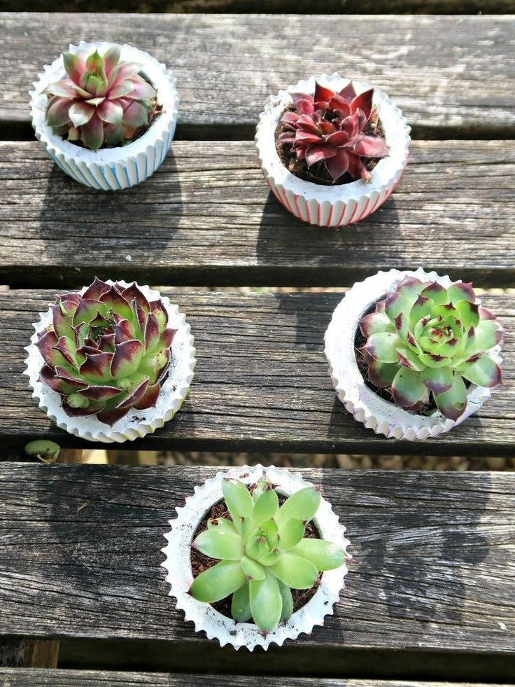 DIY Concrete Planters: Cute Pots Shaped Like Cupcakes. The beauty of DIY concret...