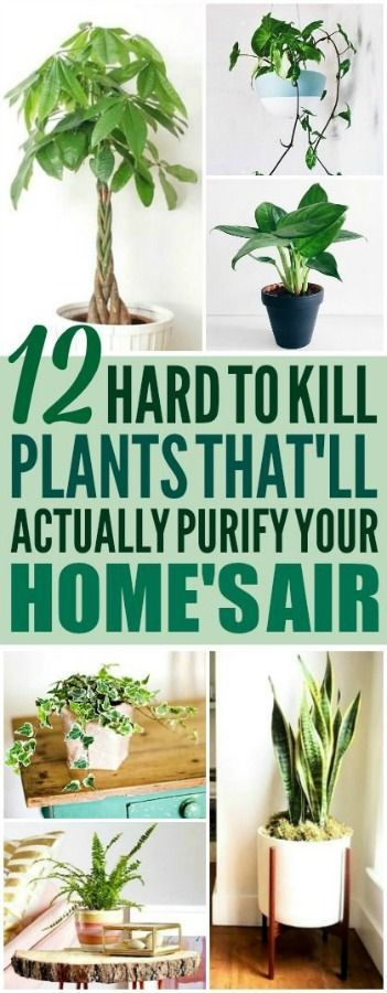 Air purifying plants are really cool! I'm pretty glad I found these house plants...