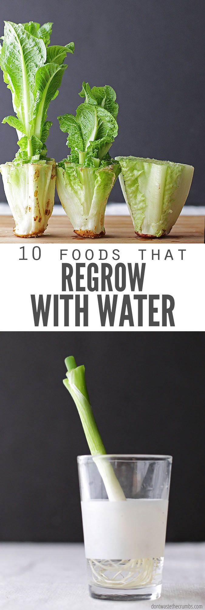 Did you know veggies can RE-grow? YES! Save money and regrow food scraps in wate...