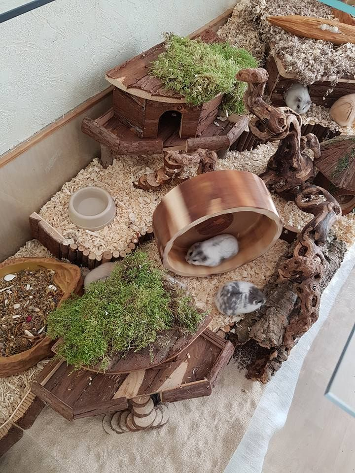 20 Easy & Cheap DIY Chicken Nesting Boxes - #Boxes #Cheap #Chicken #DIY #Easy #N