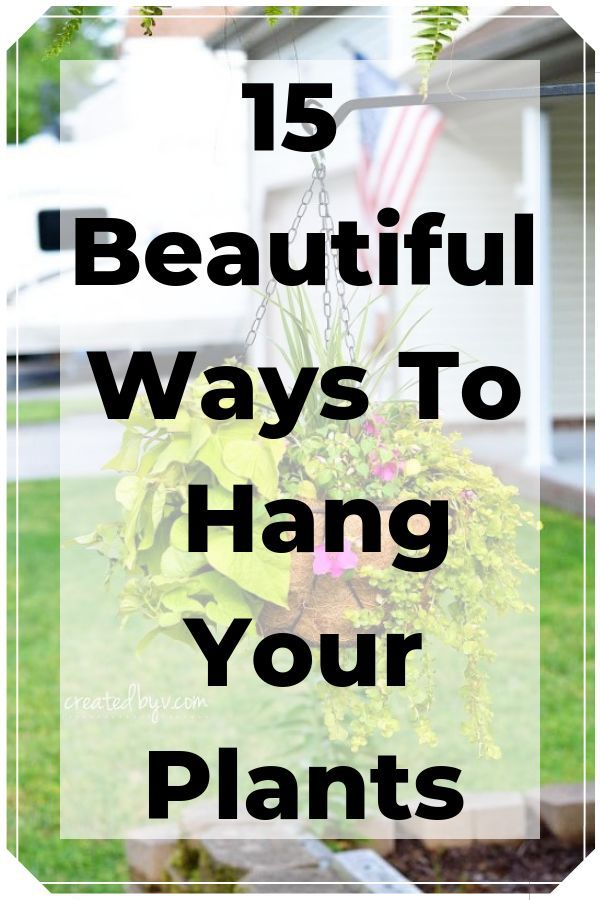 Hanging plants can really spice up your space without taking up too much room. L...