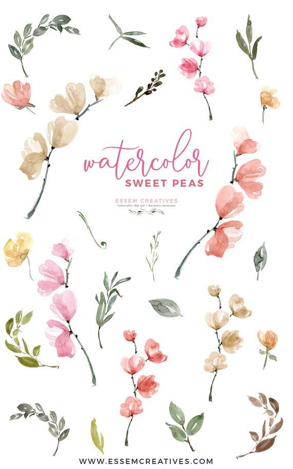Watercolor Sweet Peas Clipart Floral Invitation Background | Etsy